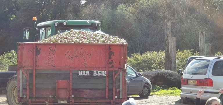 That's a cart load of apples....one of several for the day!!!